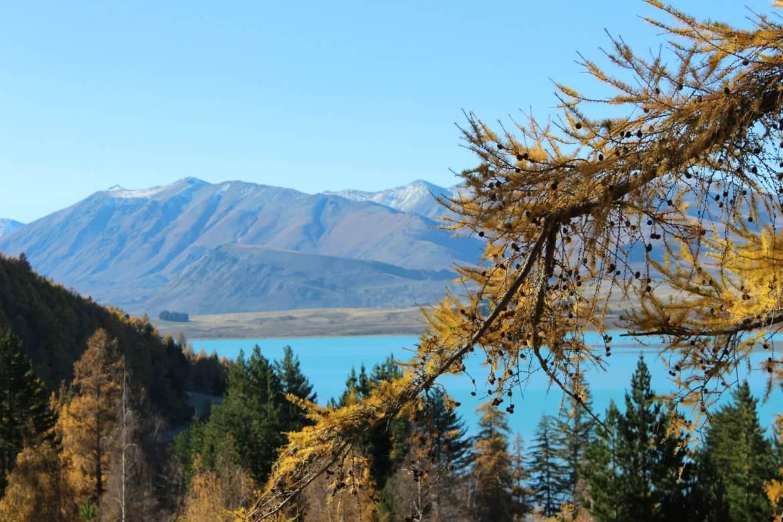 南岛秋冬必玩:提卡波湖(Lake Tekapo)过周末