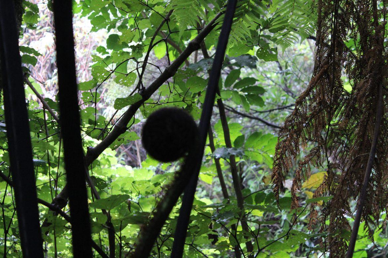 惠灵顿必去景点之一:西兰蒂亚自然保护区(Zealandia Ecosanctuary)(5⭐)