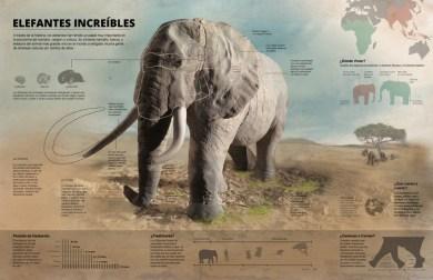 elefante-ilustracion-big
