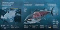epic-bluefin-migrations