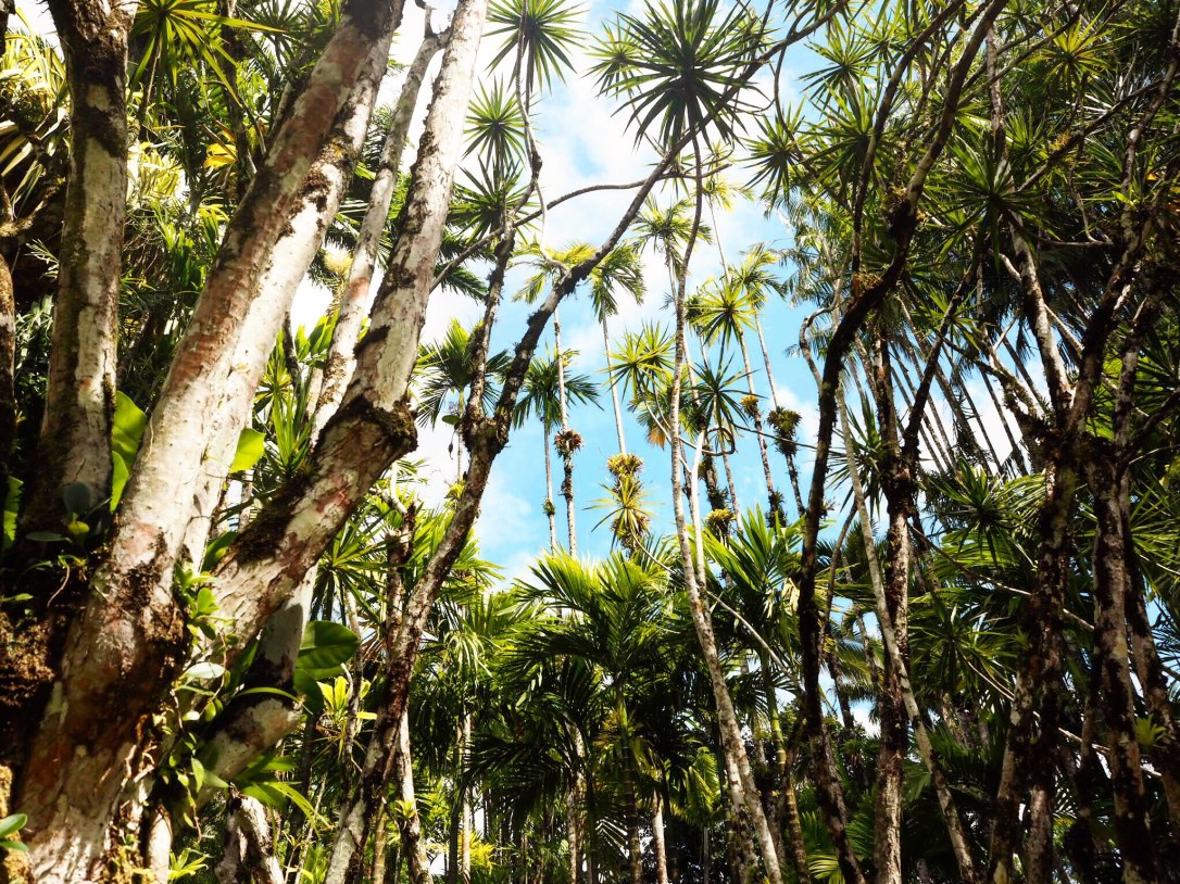 Beautiful tropical trees in the mountains of Martinique