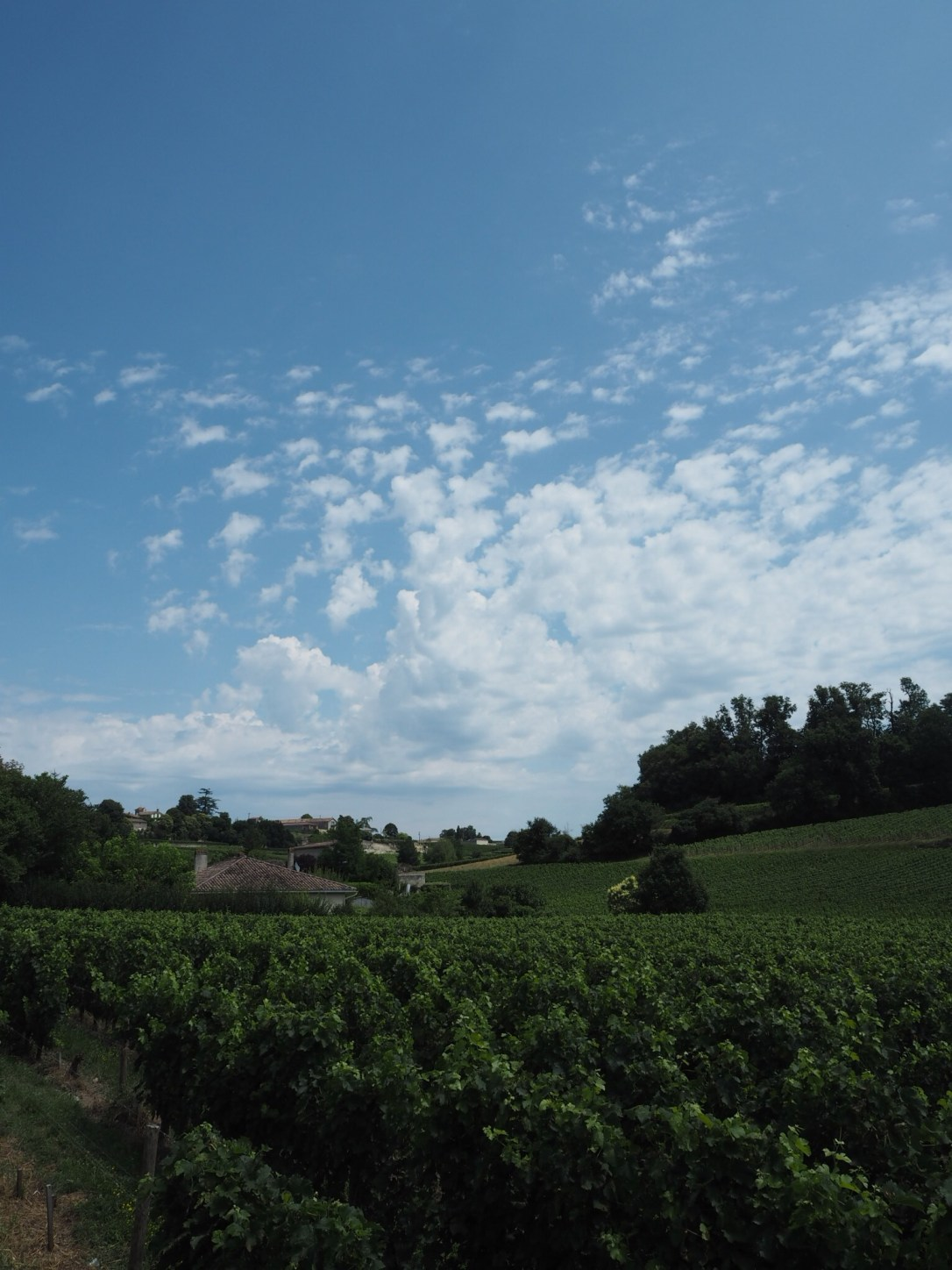 Passing vineyards on the walk from Saint-Émilion train station to the village