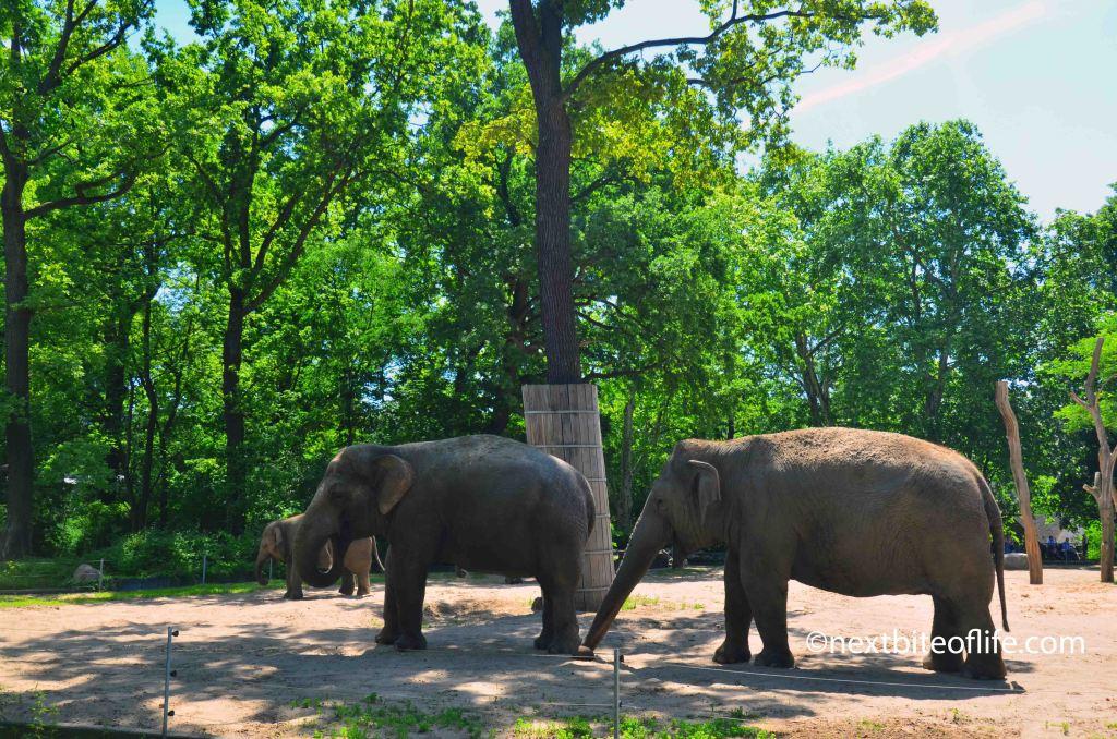 Berlin Zoo elephants