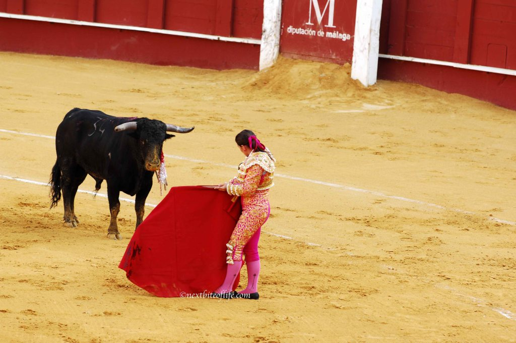 toreador for the kill at Spanish bullfight