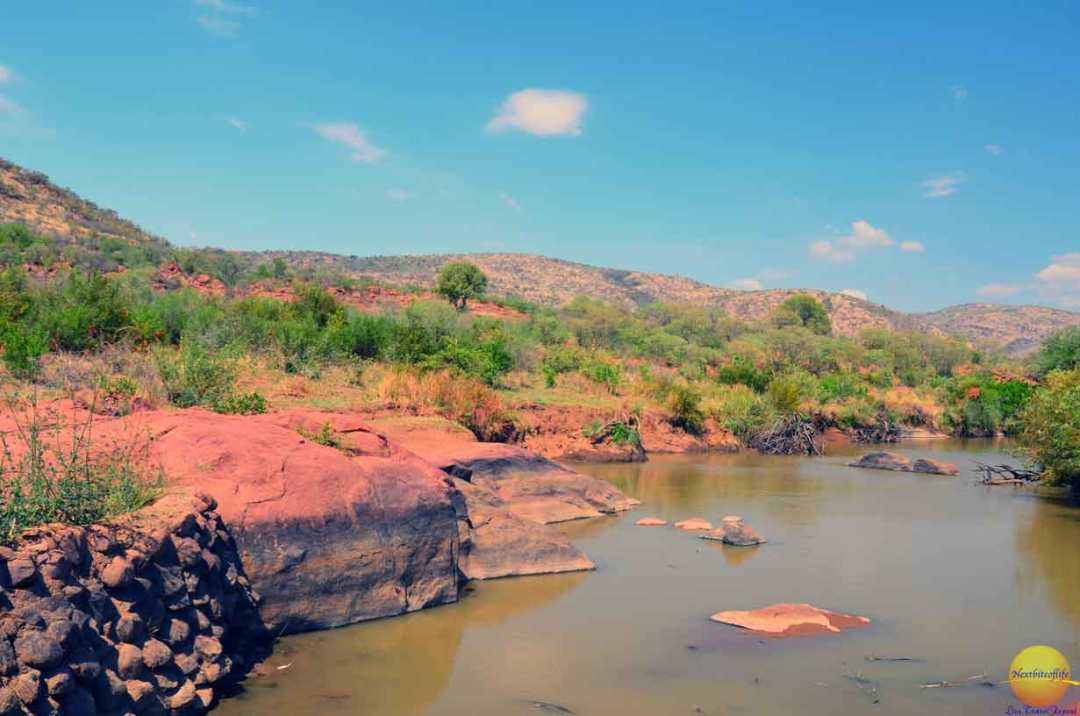 pilaneberg park watering hole