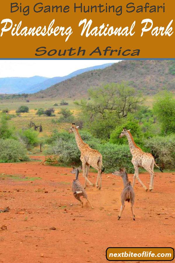 Pilanesberg National Park Safari #Johannesburg #Southafrica #joburg #safari #africansafari #biggamehunting #big5africa