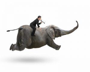 man on elephant