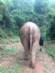 Just walking through the jungle with my elephant