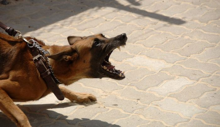 Family dog mauls four year old to death