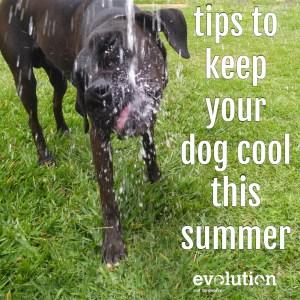 Keep dog cool tips