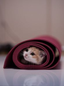 cat in mat
