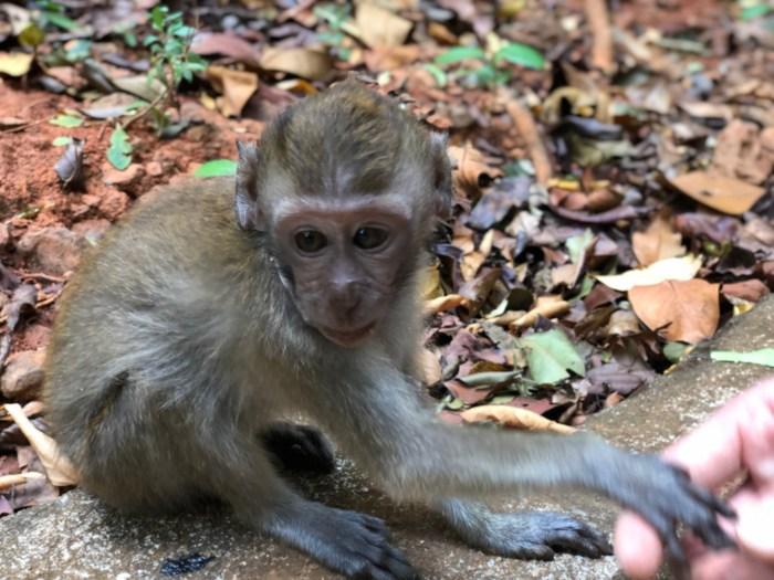 Tour b langkawi jetski tours des singes et de la vitesse