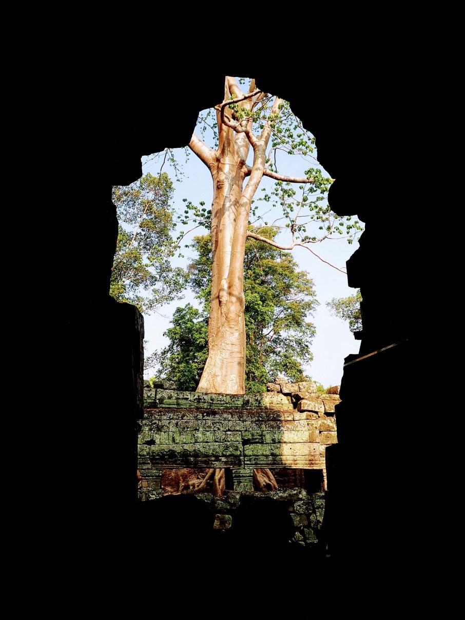 """Arbre temple angkor. Comme un arbre s'enracine dans la terre pour croître et se développer au fil du temps, un individu  s'installe quelque part sans changer de place, """"prend racine""""..."""