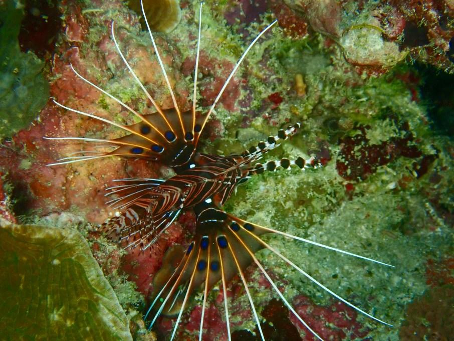 Décembre diving moaboal - cébu.