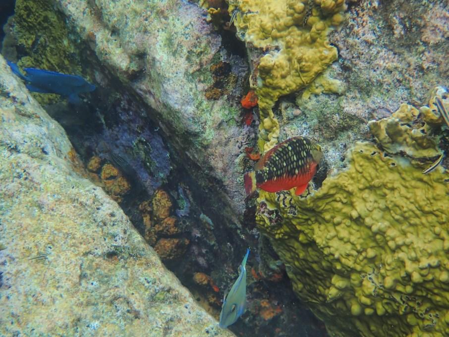 Poissons et corail