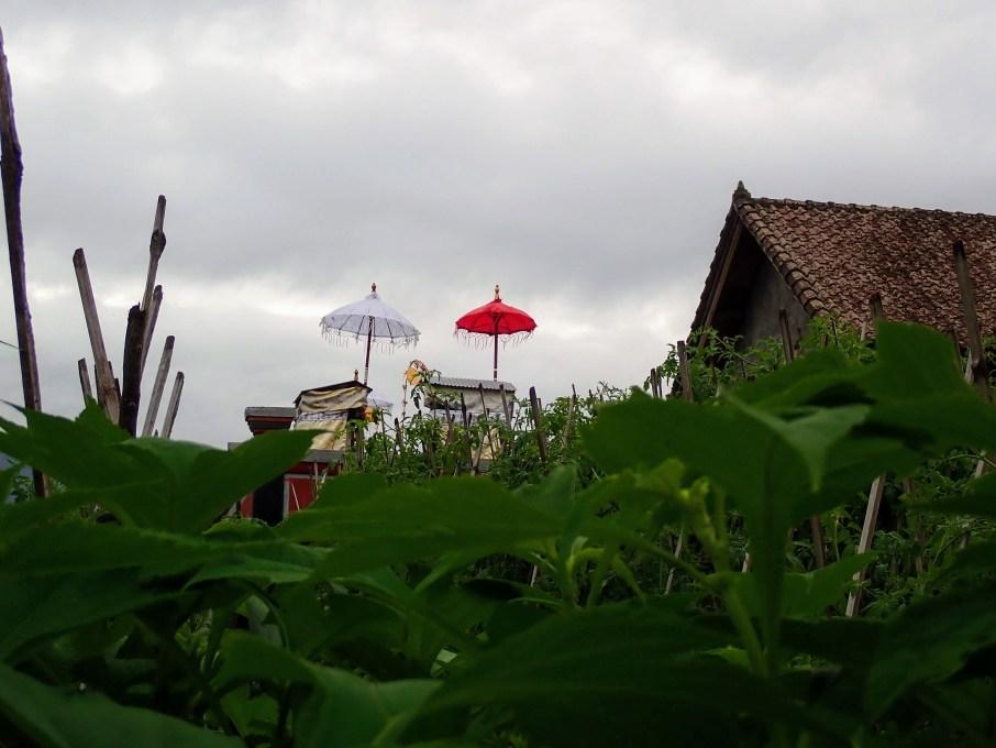 Short stop bali : 100% entre tradition nature et tourisme de masse