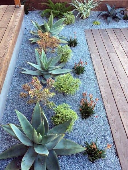 Top 70 Best Desert Landscaping Ideas - Drought Tolerant Plants on Tree Planting Ideas For Backyard id=91120