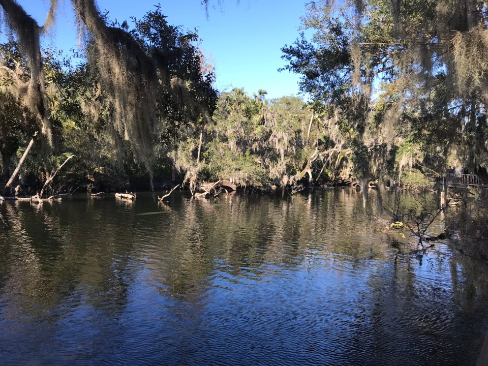 Manatee viewing at Blue Springs State Park