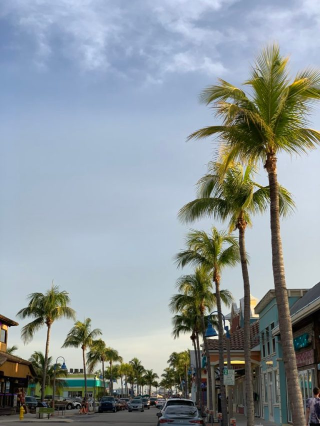 palm trees in Fort Myers beach