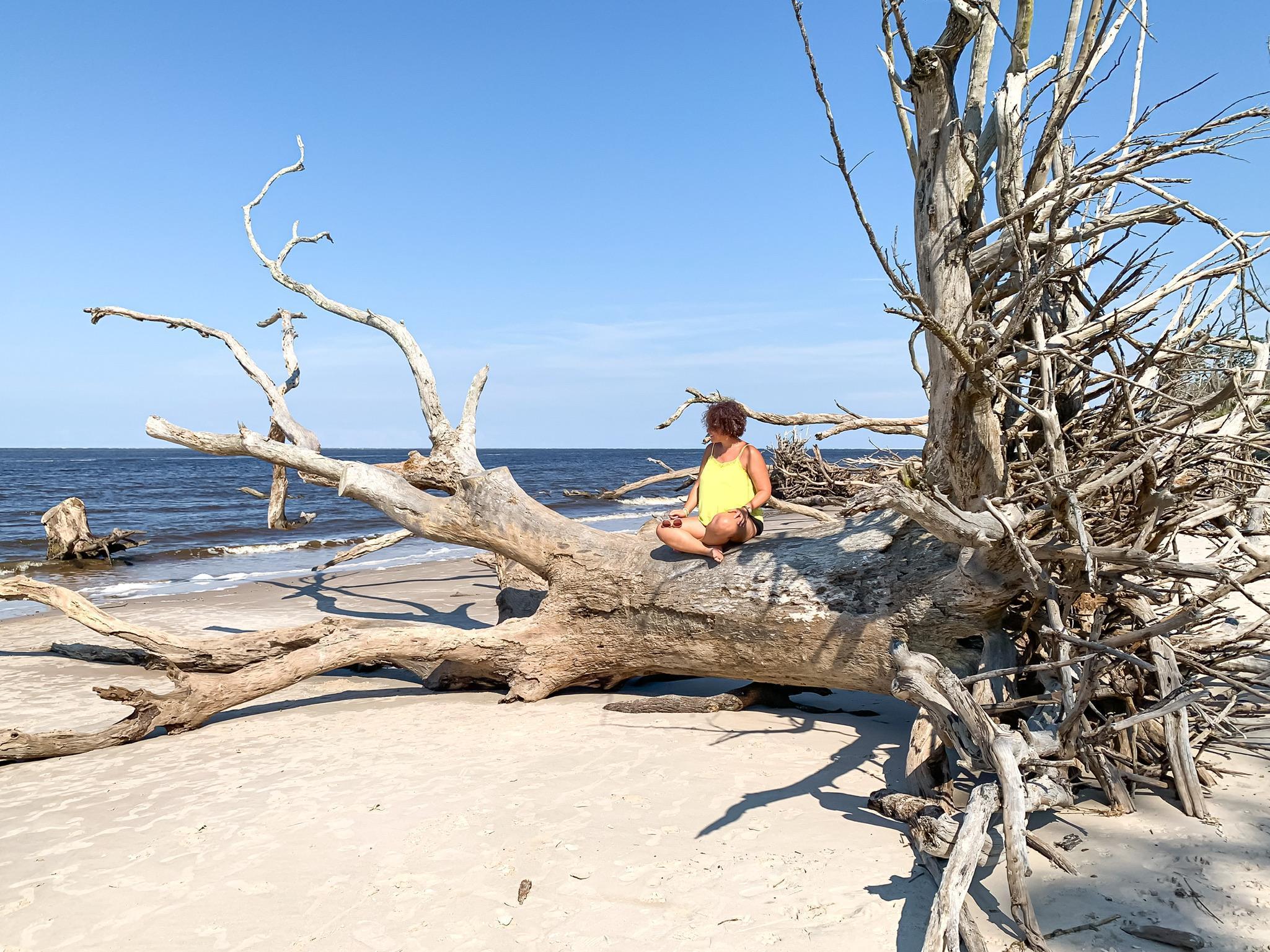 sitting on oak trees at boneyard beach in Florida