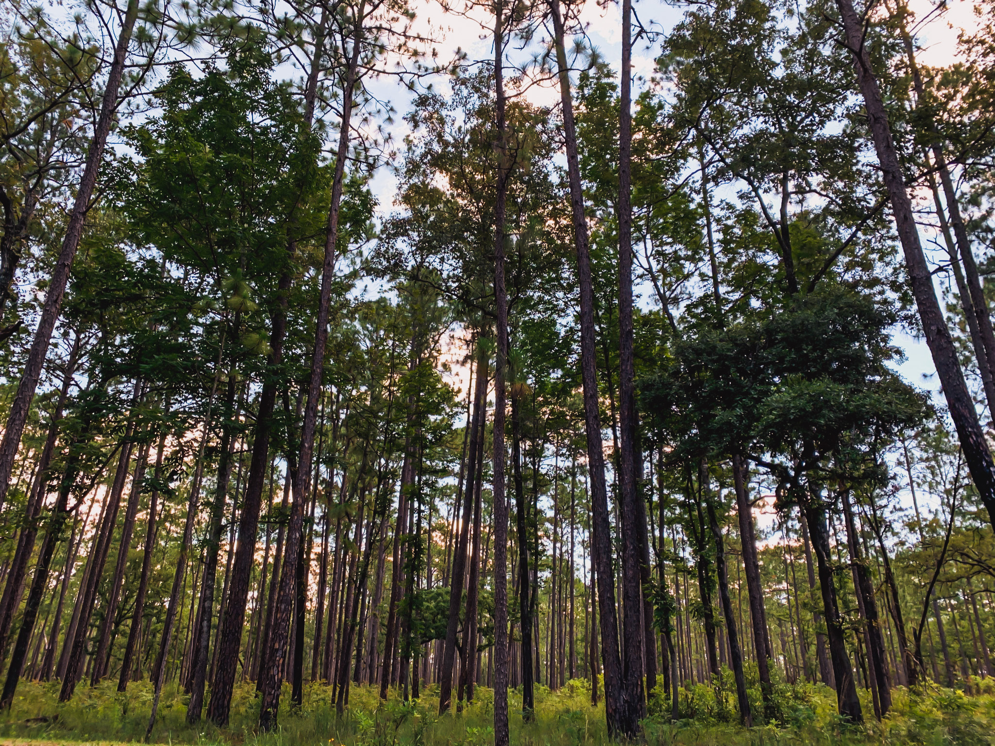 forest trees in O'leno state park historic site in high springs