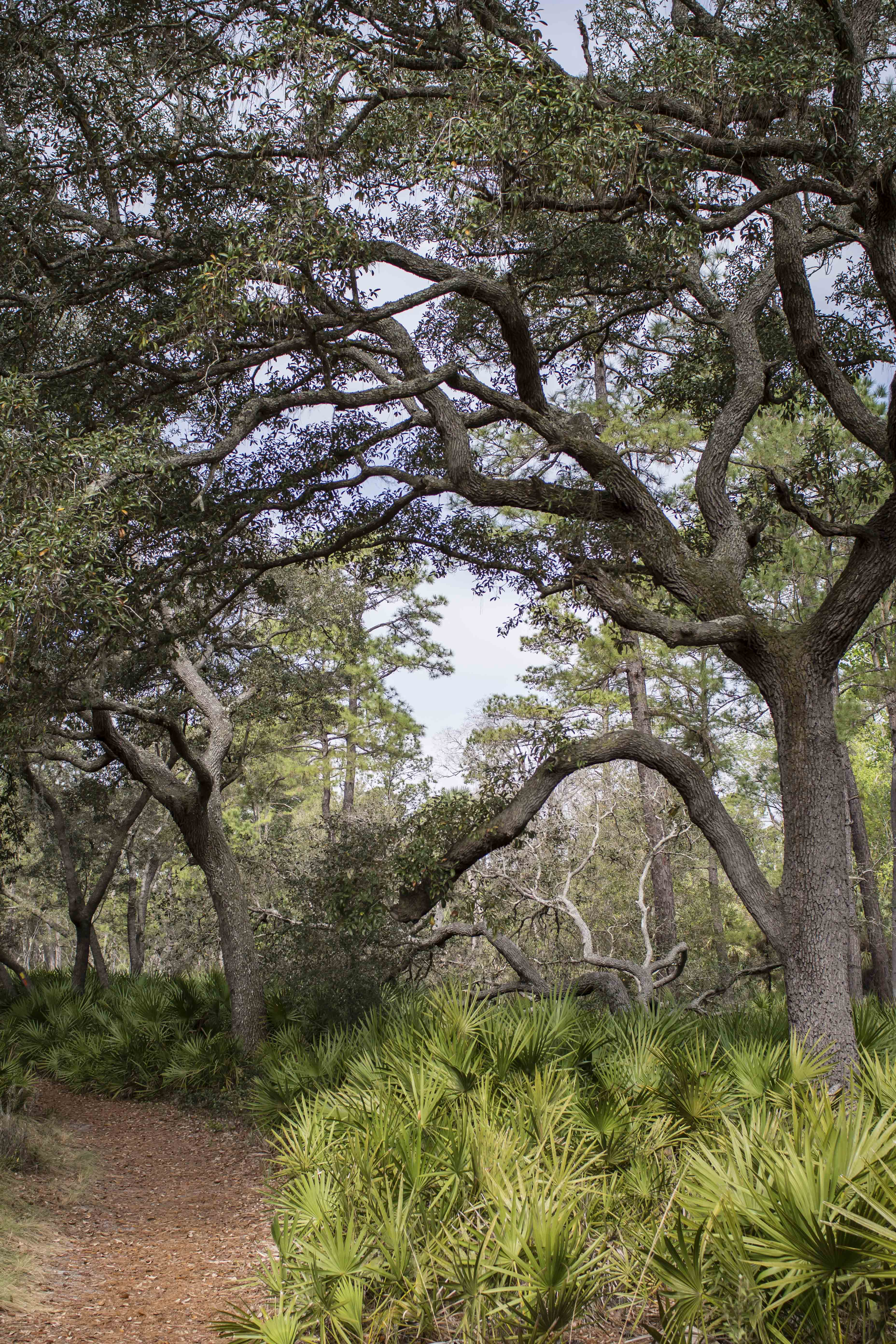 beautiful trees in central florida