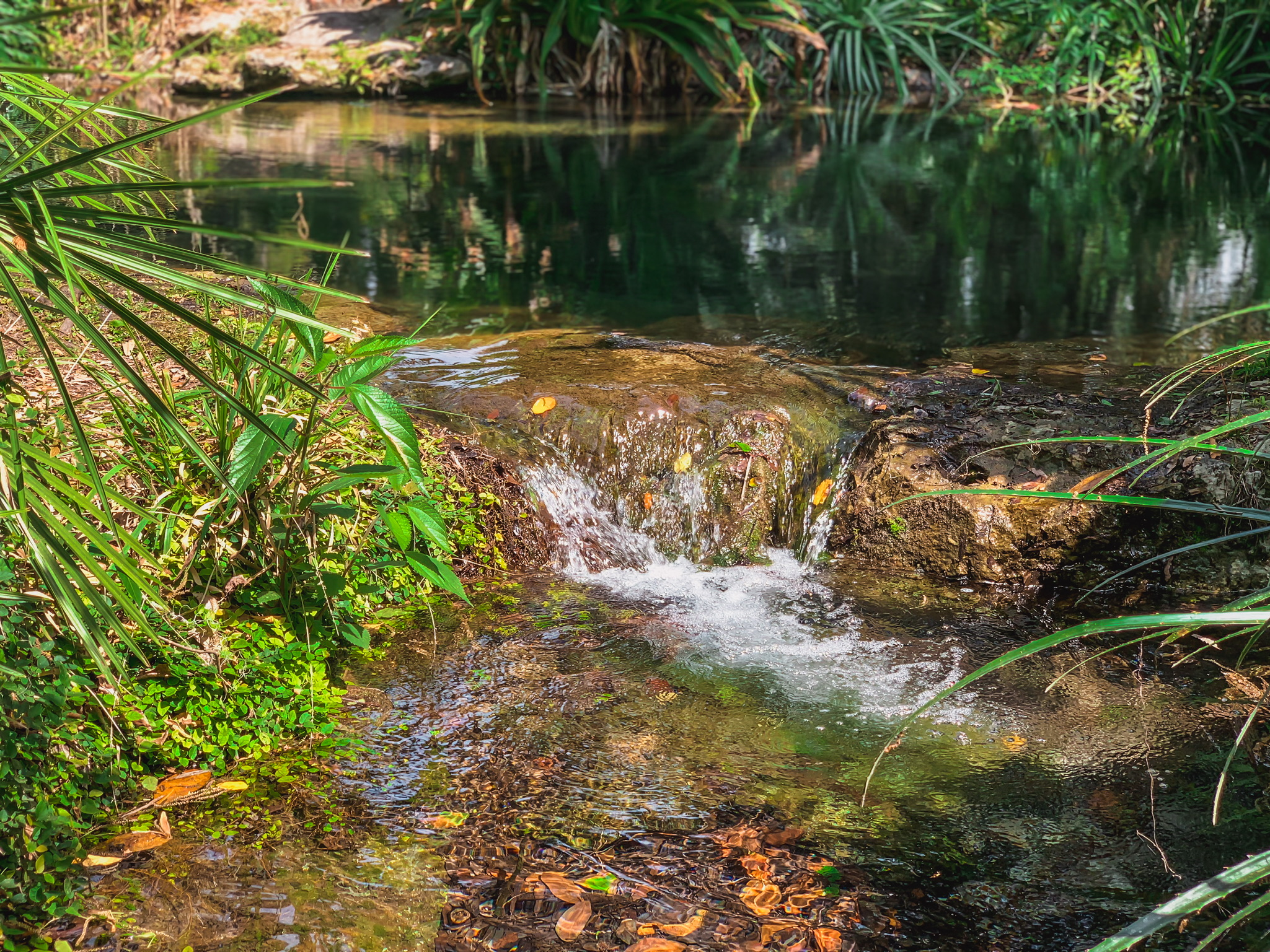 largest springs in florida