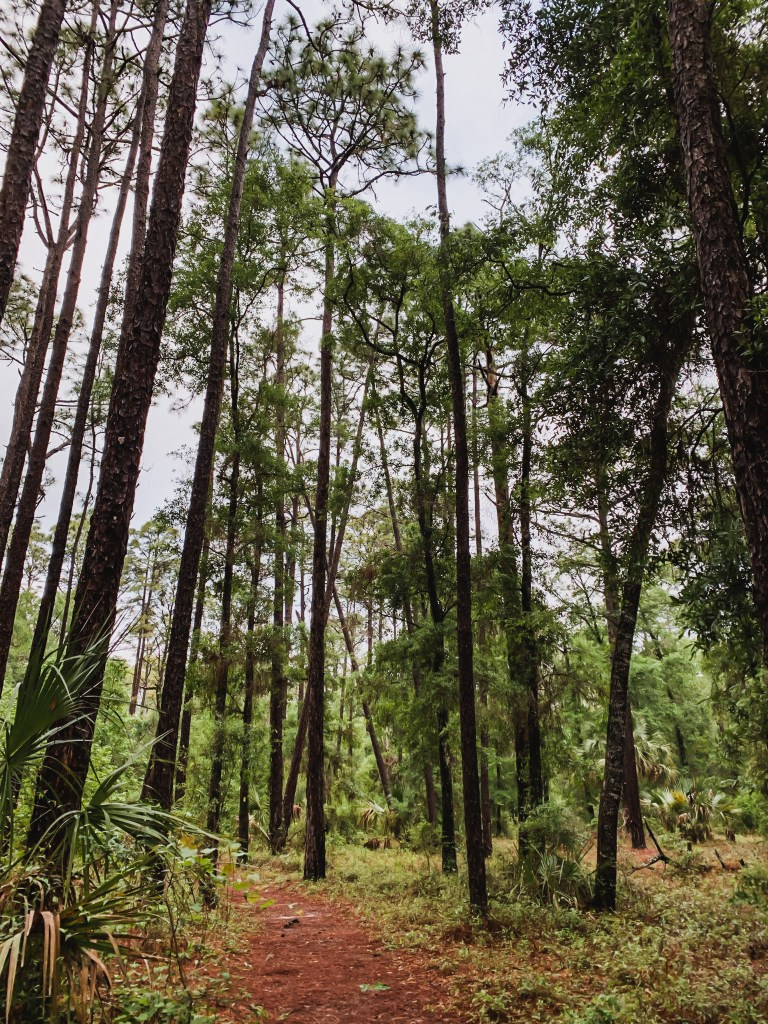 hiking trails in Withlacoochee State Forest