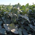 Farmers & Farm Organizations Urge EPA & USDA to Address Threat from Dicamba Pesticide Drift