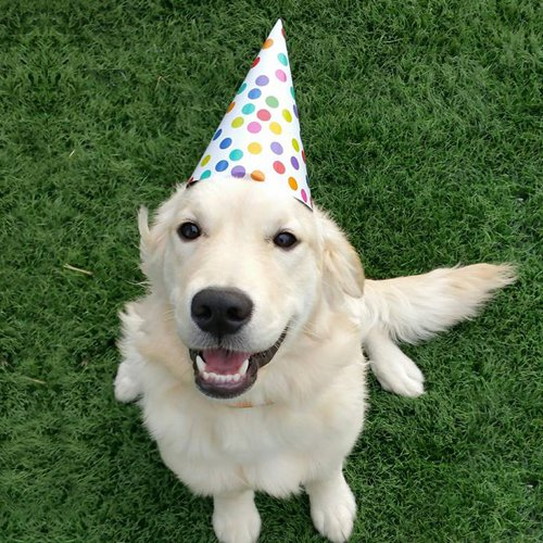 Happy Dog image of Golden Retriever wearing a birthday hat