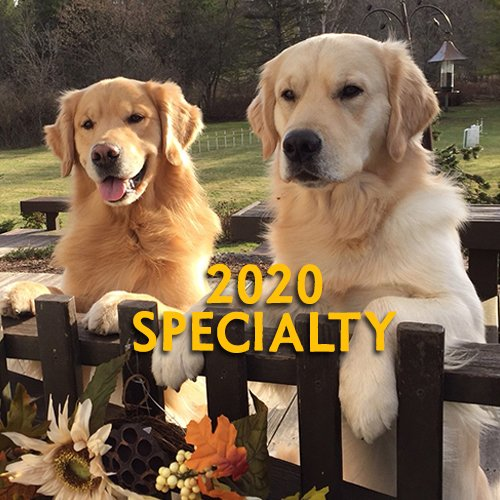 Northern Flyway Golden Retriever Club Home Page Specialty Button