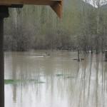 prime goose habitat