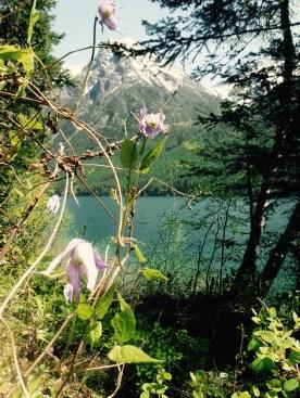 Spring Time at Bowman Lake