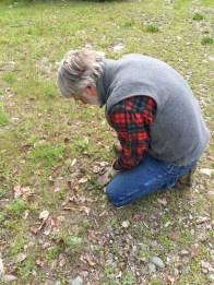 Randy murdered knapweed