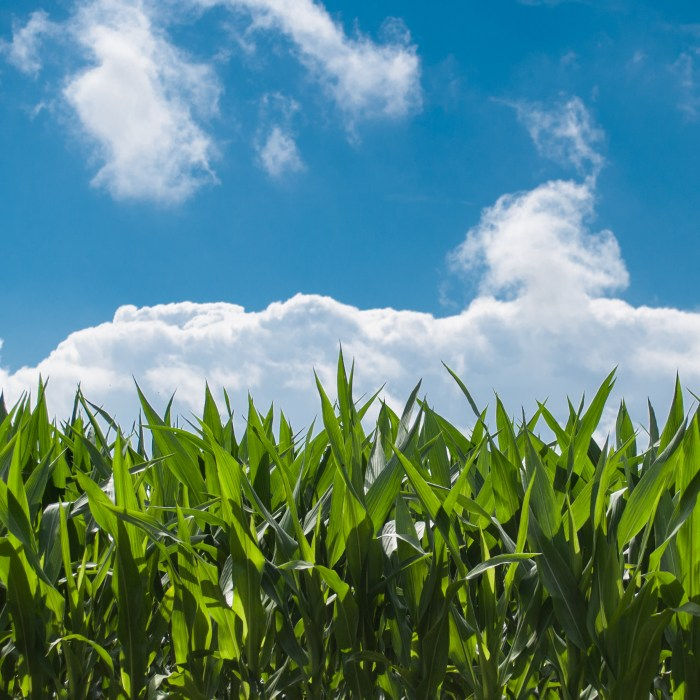 NFU, Biofuels Industry Call on Trump Administration to Honor Commitment to RFS and Rural America