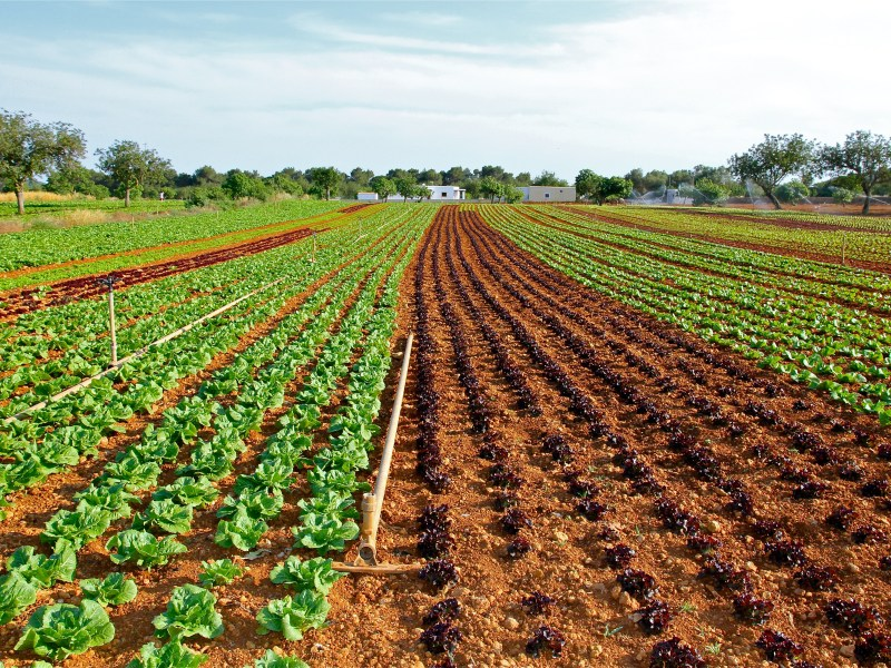 What Can Farmers Do About Climate Change? Dynamic Cropping Systems