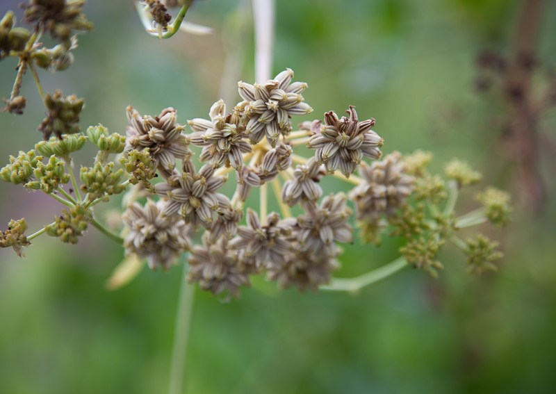 Access to Markets: Colorado Herb Cooperative