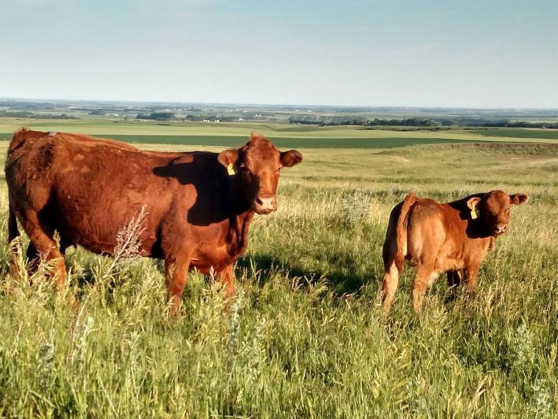 Access to Efficiency: The Symens Farm Family & Conservation Practices