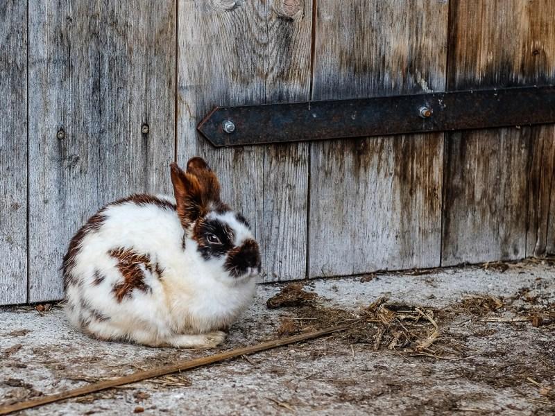 Access to Markets: Black Rabbit Farm, Media, and Marketing