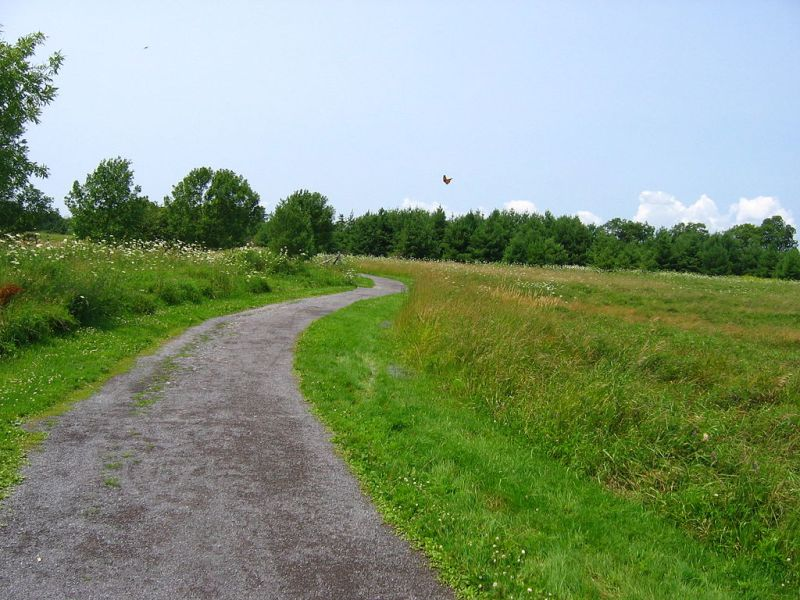 Access to Land: Conservation Reserve Program Transition Incentives Program