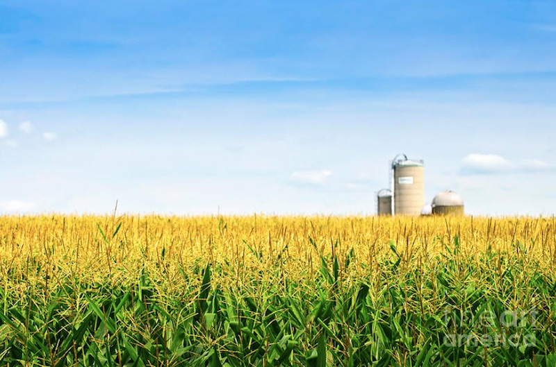 Plan to Expand Biofuels a Step in the Right Direction; More Work Needed to Move Biofuels Industry Forward