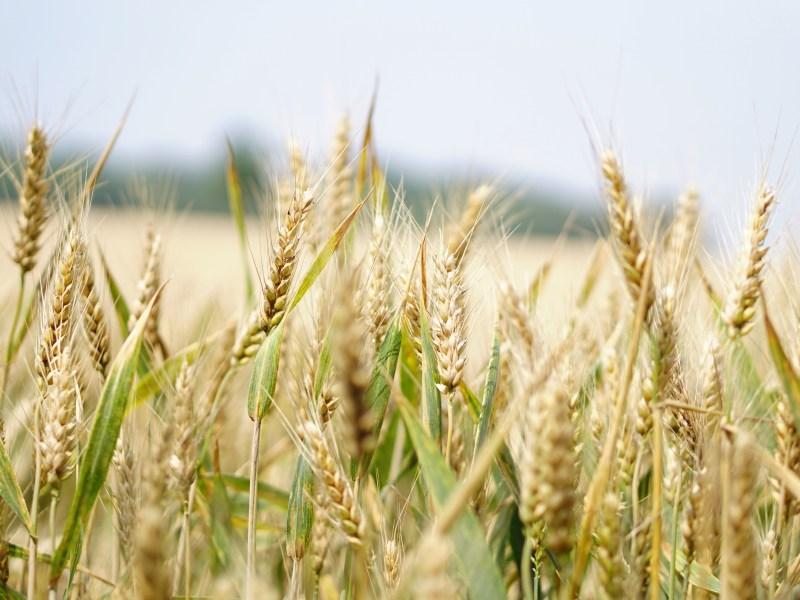 Access To Markets: Grain Futures