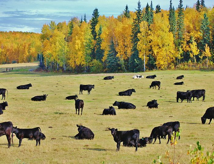 What Do Farmers Need to Know About Climate Change? Markets for Climate-Smart Ag Products in Alaska
