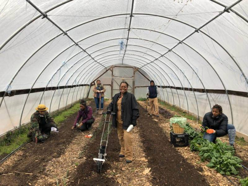 Diagnose and Discuss: Food Safety Clinic Benefits Growers
