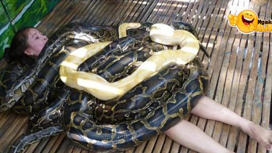 Jasa Pijat Ular Python
