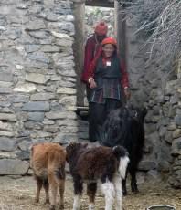 Lama Tenzin Dolpo Trek2