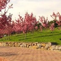 Sakura'larda Hayat Bulan Ertuğrul Şehitleri