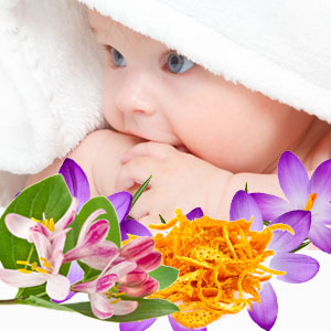 Fresh Air Fragrances: Baby Clean Fragrance Oil