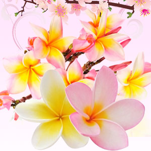 15 Fragrance Oils for Mother's Day: Puakenikeni Hawaiian Flower Fragrance Oil