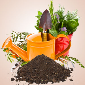 What Are the Best Scents for Summer: Garden Dirt Fragrance Oil